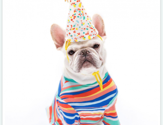 French Bulldog in Oh Joy Pet Collection for Target STriped Shirt and Party Hat