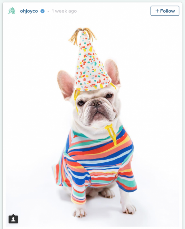 French Bulldog in Oh Joy Pet Collection for Target Striped Dog Shirt and Party Hat