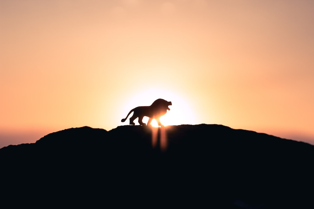 Astrology 101: What Can Your Zodiac Sign Teach You? Zodiac sign with dates; zodiac sign by month; zodiac sign personalities | Happy As Annie (Leo, the Lion, silhouette of lion on top of hill with sun shining behind it)