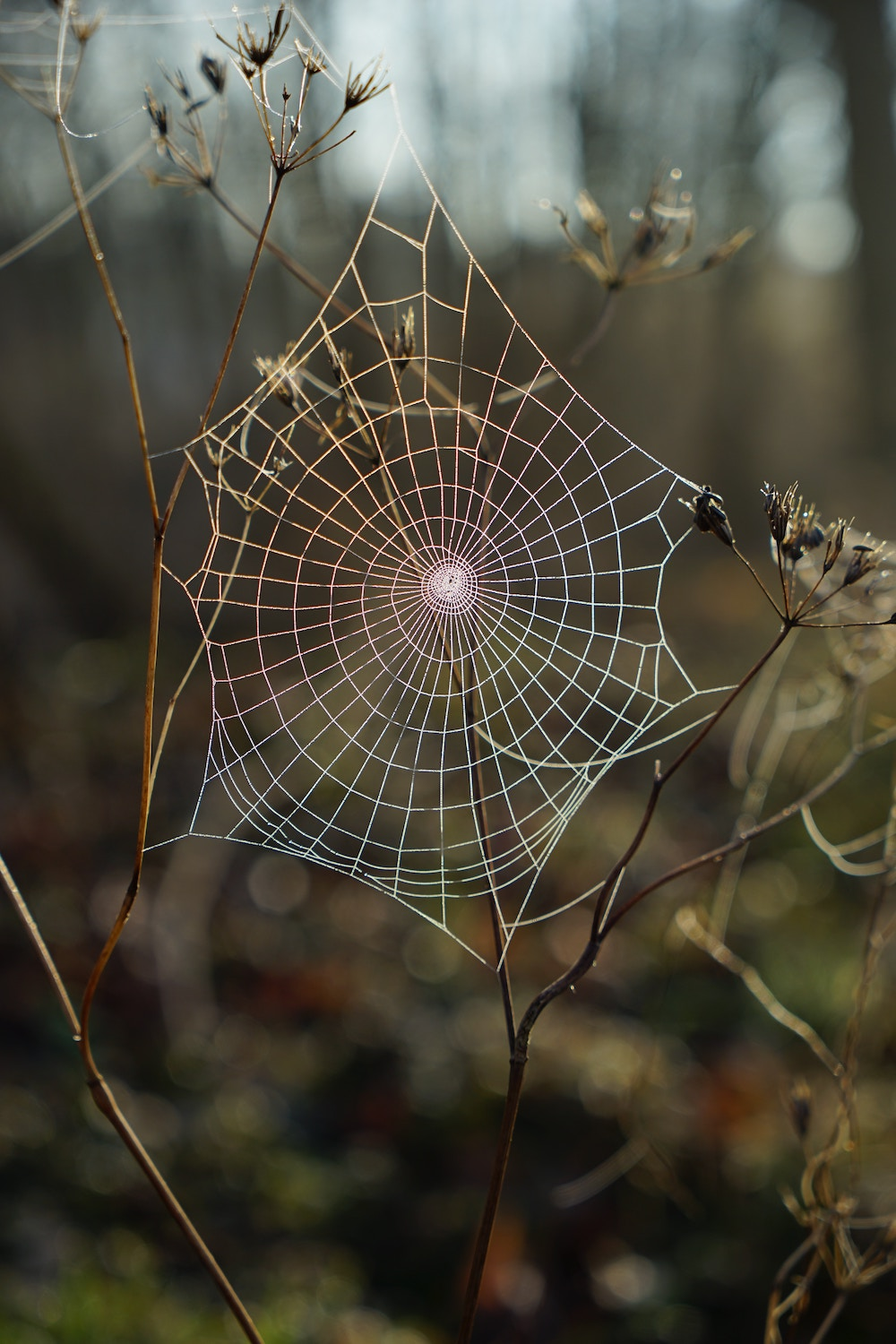 Astrology 101: What Can Your Zodiac Sign Teach You? Zodiac sign with dates; zodiac sign by month; zodiac sign personalities | Happy As Annie (Scorpio, the scorpion or spider. Spider web in forest.)