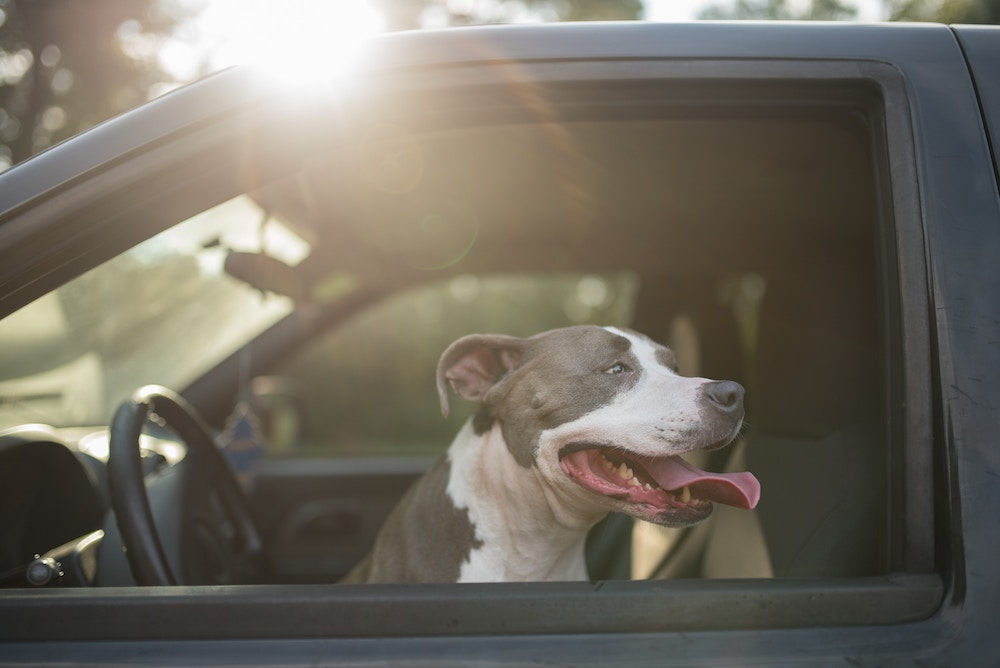 Drive with the windows down. Happy As Annie   5 Easy Ways for City Dwellers to Spend More Time in Nature