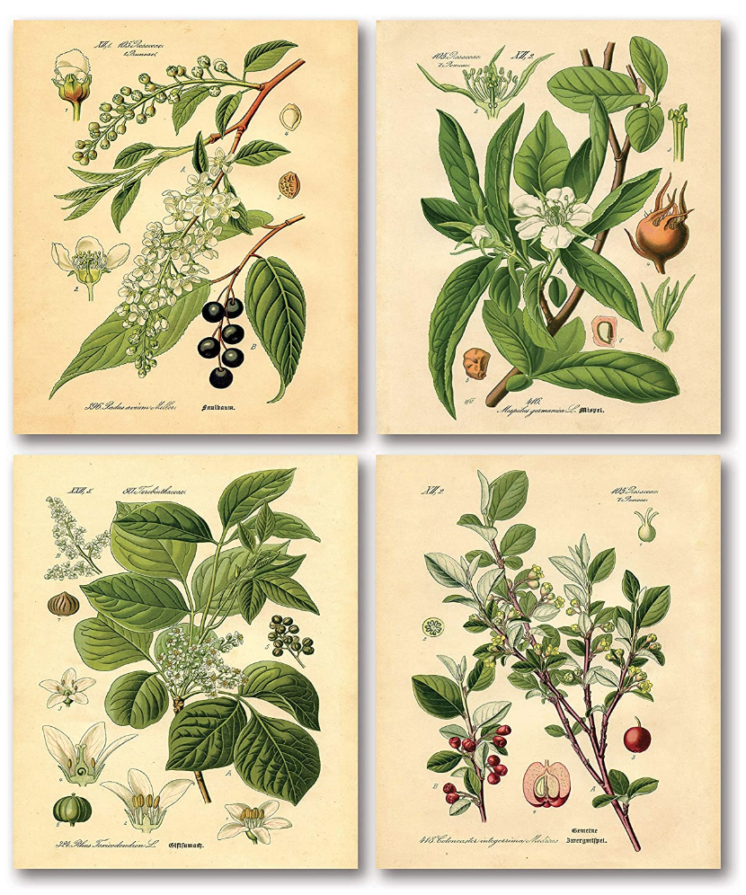 Set of 4 vintage-style botanical prints on The Ultimate Witchy Gift Guide by Happy As Annie